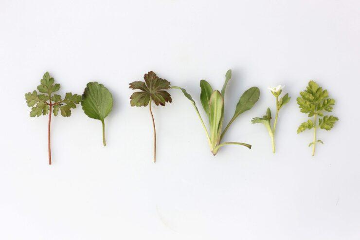 Mixture of Herbs