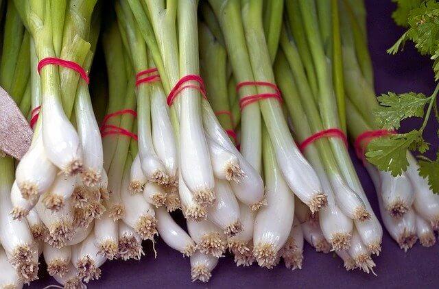 Scallions (Green Onions)